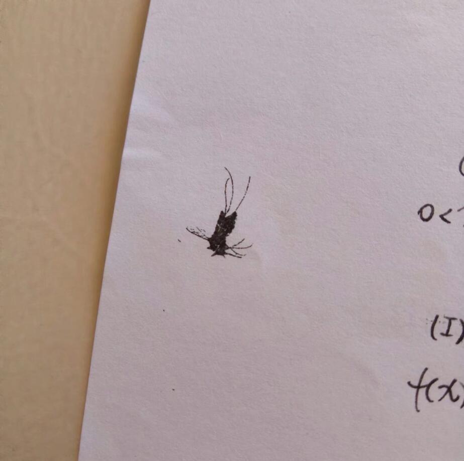 被印刷了几百份的可怜蚊子。(WPFSIS)