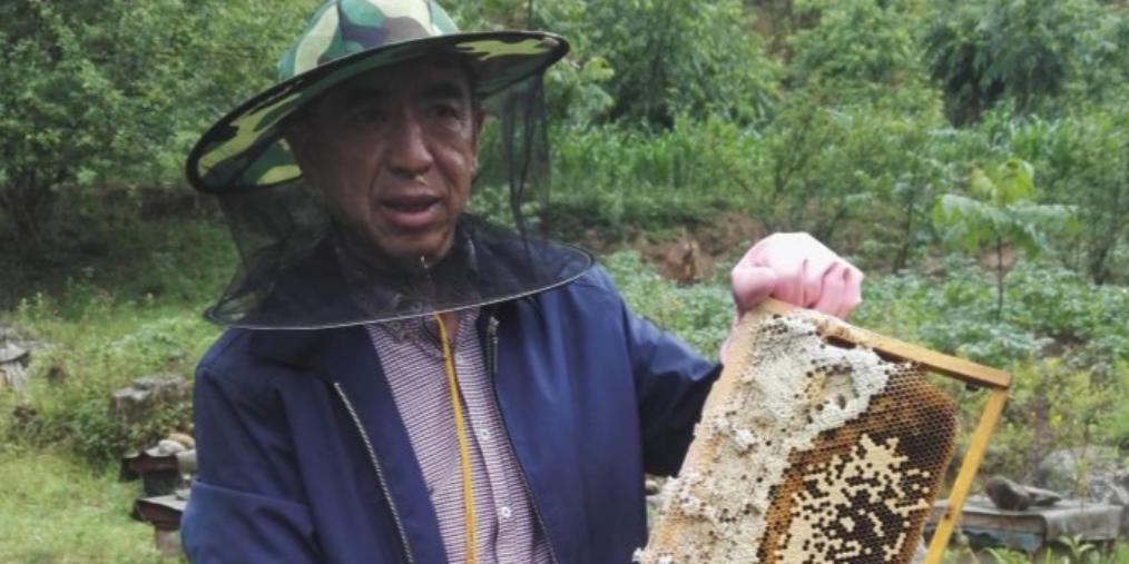 坚守内心热爱 养蜂人与蜜蜂的甜蜜时光