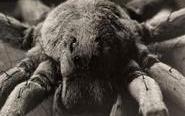 黑白昆虫蜘蛛微距照片