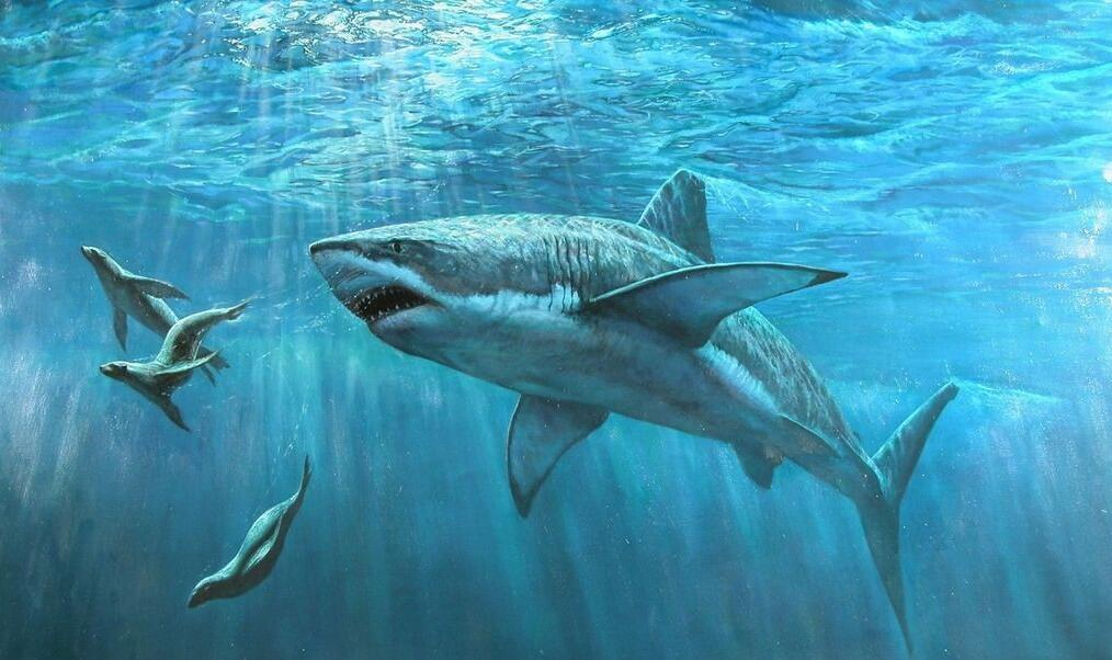 好奇研究院|为什么鲨鱼吃东西牙齿会掉?