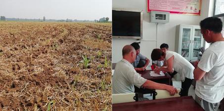 村民40亩庄稼被毁 村干部:认错地了