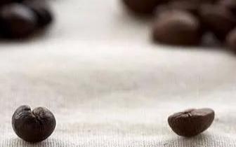 咖啡还分公母!你喝的是公豆的还是母豆的吗?