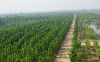 唐山召开推进国家森林城市创建工作会议