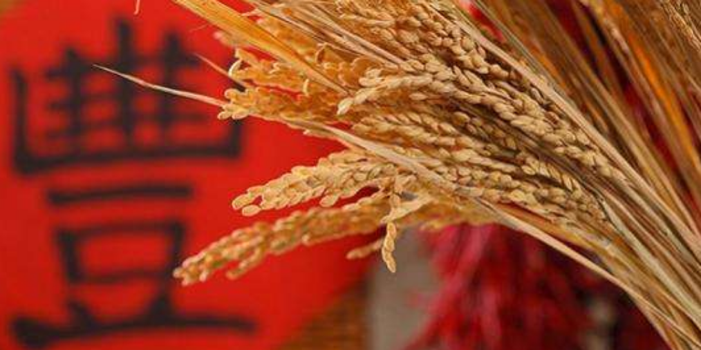 """我国将秋分设立为""""中国农民丰收节"""""""
