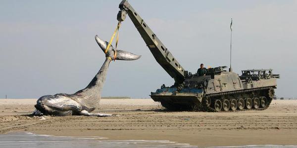海滩出现鲸鱼尸体!荷兰出动战斗救援车