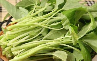 """空心菜最易吸收农药、重金属 是""""毒中之王""""?"""