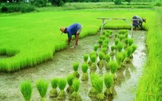 """福州十条措施助推现代农业发展 条条是""""干货"""""""