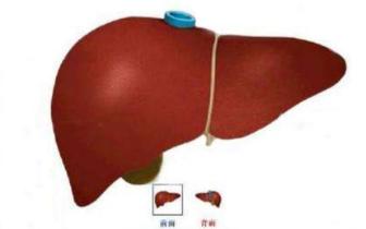 人体容易发生癌变的9大器官!