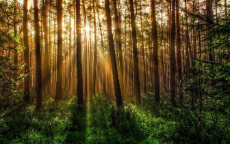关爱绿色生命:森林城市人人建 生态成果人人享