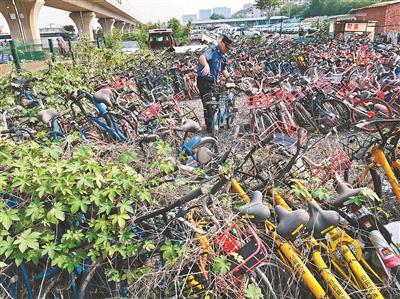 北京大量被暂扣共享单车无人领 落灰长草藤蔓缠绕