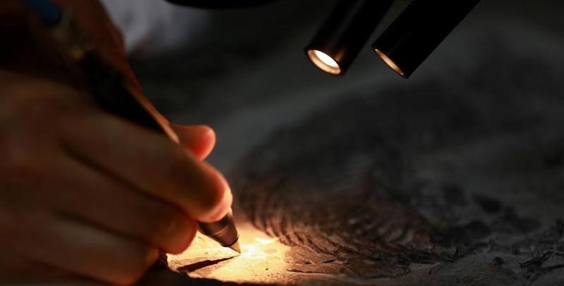 探秘化石修复师 别人修文物我们修化石