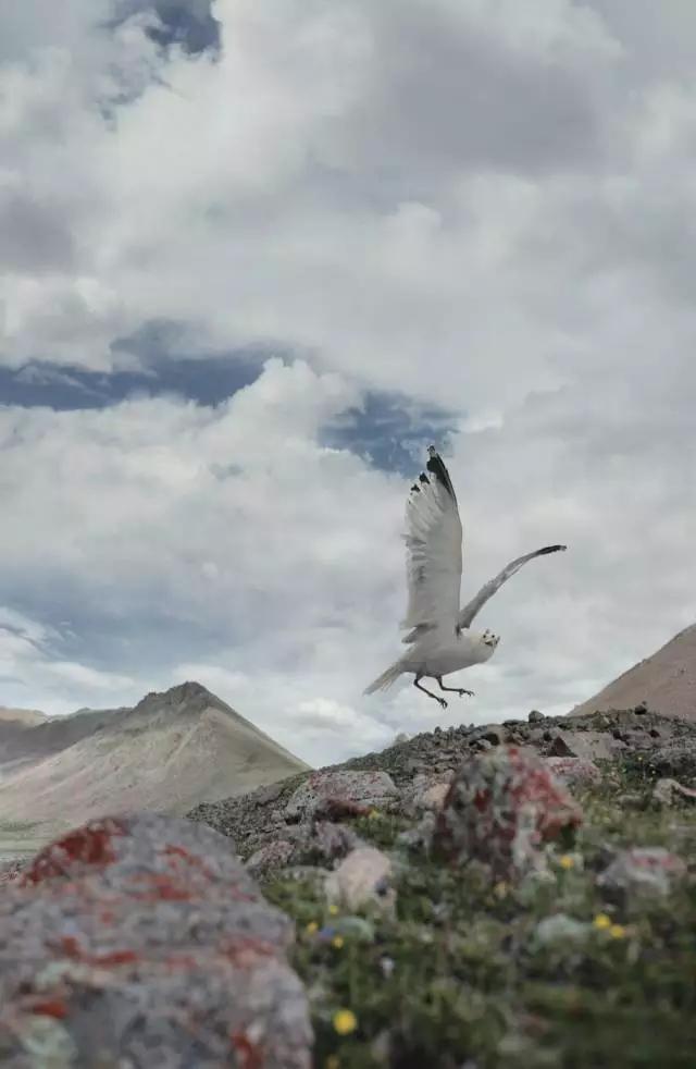 周裕隆拍摄的驮鸟