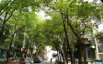 潜江市粮食局:创建森林城市 我们共同参与