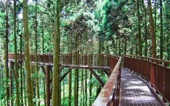 佛系旅游必体验!全台五大森林浴仙境
