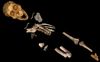 300万年前人类祖先在树上睡觉 能在地面直立行走