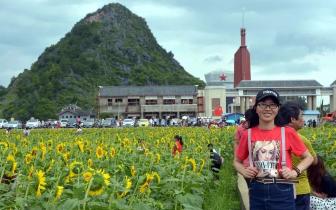 灌阳县新圩镇:250亩向日葵助力乡村经济振兴