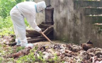桂林开展打击走私濒危物种专项行动 已捕诉92人