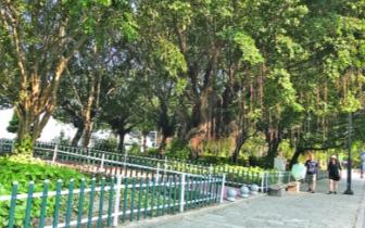 滨江|滨江长廊部分绿化带改造提升 新增10种花草树木