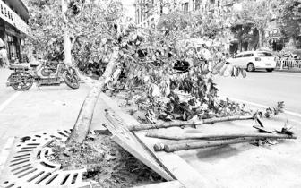 大树种了5年不长根 原来是施工方当年未按规范施工