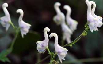 世界上最奇异的13种植物 第一个就在河北!