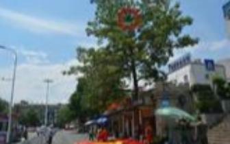 视频:惊呆了!攀枝花一女子爬上10余米高大树轻生
