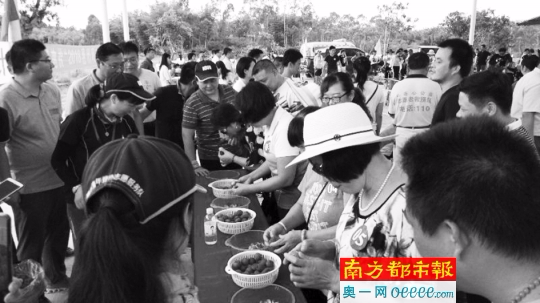 惠州观音阁果蔬采摘节开幕,为期一个月