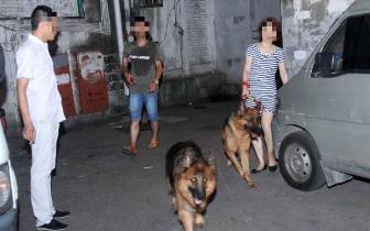南昌胜利路上一女子带着狼狗出入 警方现场处罚