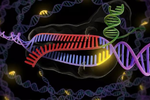 基因编辑对遗传病的治疗研发