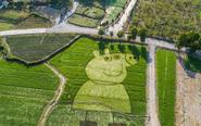 农民稻田种出小猪佩奇