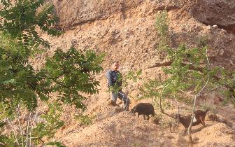 男子救羊被困半山腰 灵宝消防紧急救援