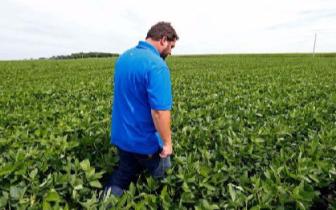 贸易争端重创大豆出口 美国大幅调低大豆出口预期