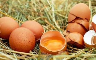 白皮鸡蛋和红皮鸡蛋哪个更有营养?