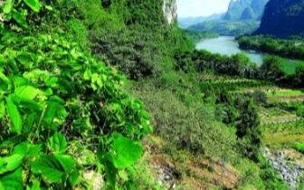 桂林漓管委开展世界自然遗产地的生态景观修复工作