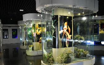 峨眉山博物馆闭馆维修至今年11月30日