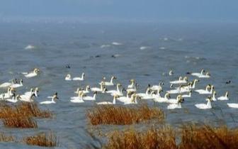 上半年全国地表水环境质量公布 浙闽片河流水质良好