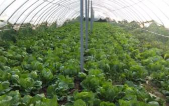 省农业厅领导到卢氏县调研产业扶贫