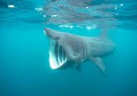 你每用一支防晒霜 深海里会减少几头鲨鱼?