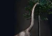 迄今最大恐龙脚印化石被发现,宽约1米