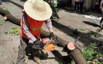 中城街道:破解城市管理热点 让百姓生活更舒心