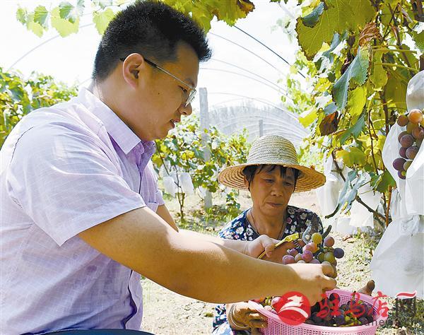 """葡萄产业带动贫困户种出好""""钱""""景"""