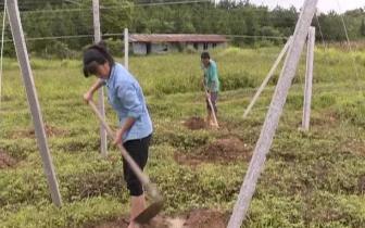 产业助力扶贫!黄竹村将大力发展百香果种植产业!