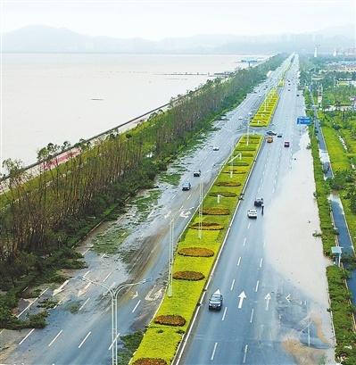投资996万,珠海机场东路绿化灾后恢复项目获批复