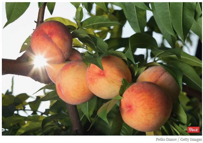 双语阅读:噩耗!气候变化正令10种食物变得濒危