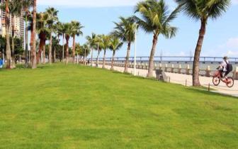 情侣路800米环境景观提升工程改造完工