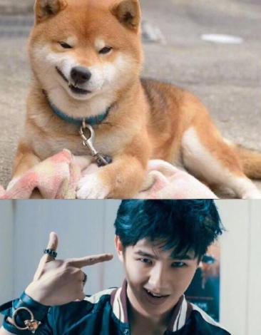 刘昊然晒与柴犬撞脸照 网友调侃:自己玩梗可还行