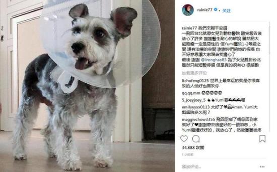 杨丞琳爱犬患病心情低落李荣浩飞台北探望