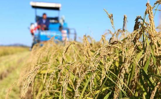 科技日报:浮夸之风吹歪了海水稻 宣传上要克制