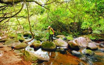古田保护区一大奇观 河水突然消失又出现