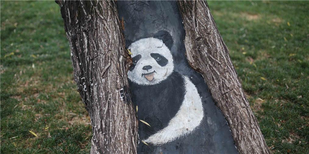 """沈阳一公园现树洞""""动物园"""" 手绘动物上树"""