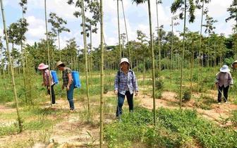 广西钦州 发展特色种植 助贫困户脱贫